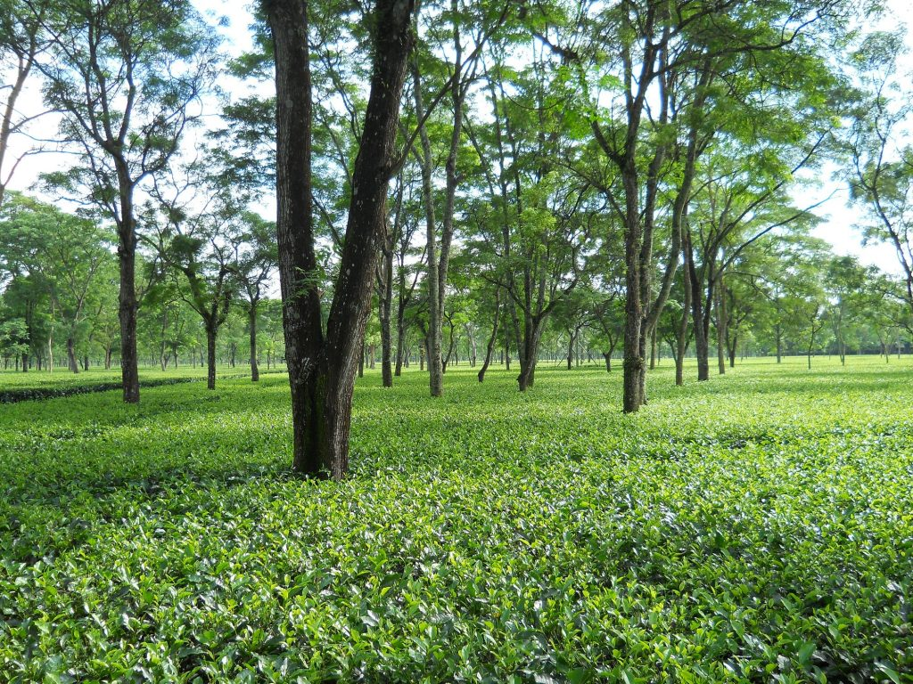 TOUR TO TEA GARDENS, HILLS & BEACHES (07D/06 N)